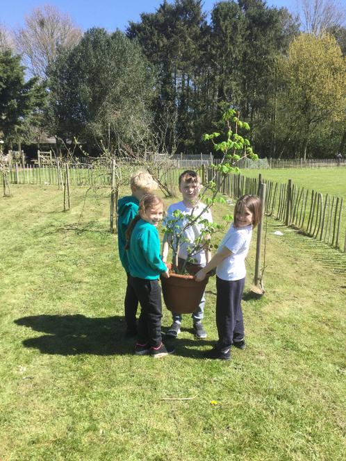 Working together to get the tree ready to be planted.