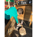 Rex the rabbit loves cuddles and fuss!