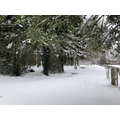 A snowy Heartwood Forest