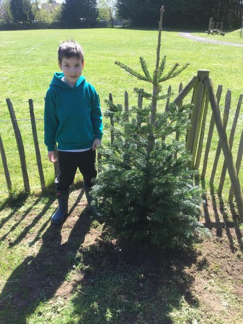 Very proud of the tree we planted.