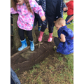 Investigating tree roots