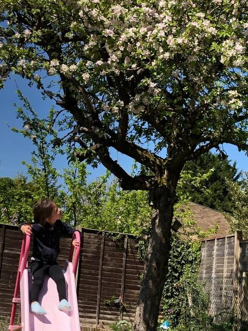 Molly investigating bees around her apple tree.