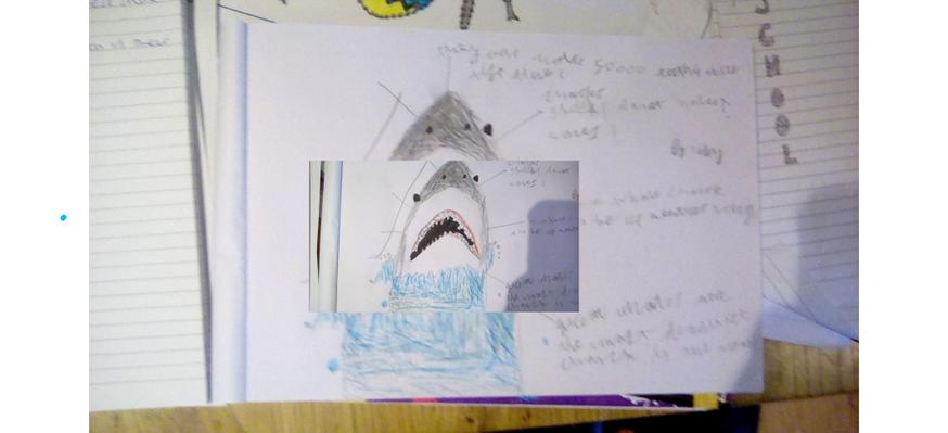 Toby's picture of a shark and he wrote some facts