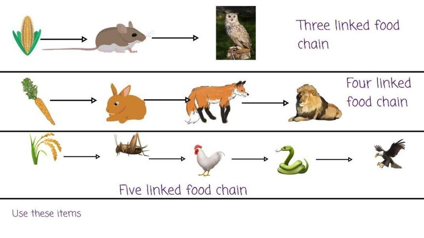 Toby created a food chain