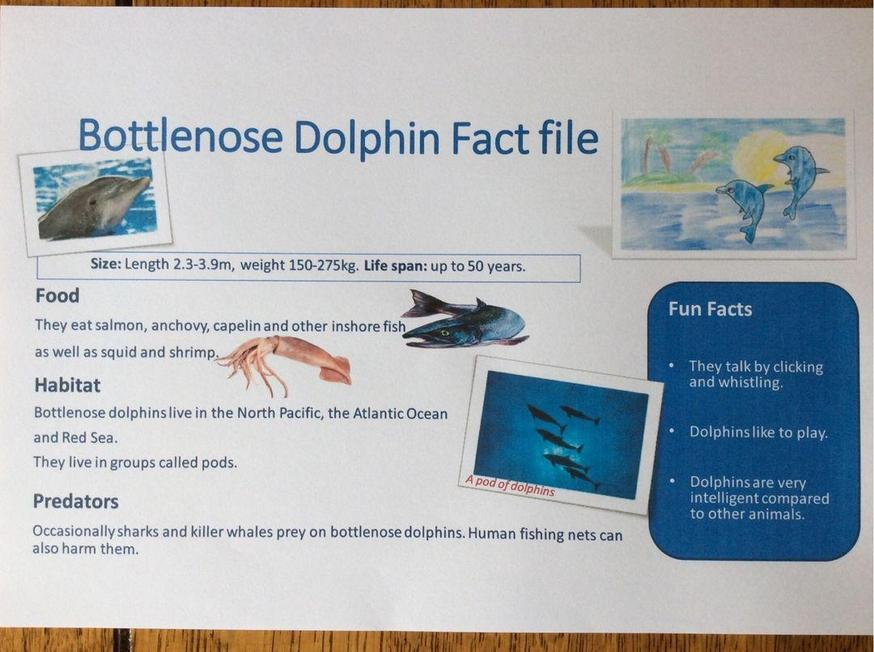 Evie' a factfile about dolphins