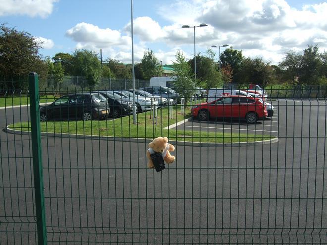 Teddy investigated traffic around the area.