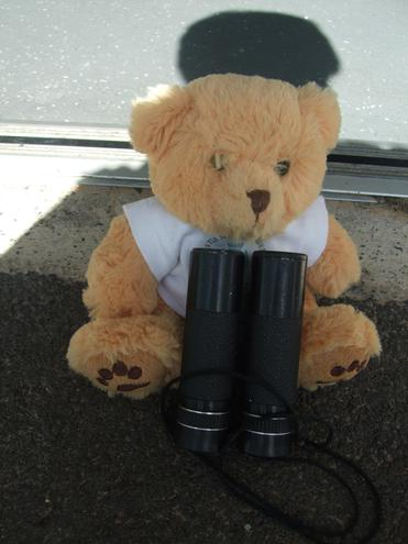 Teddy set off with his explorer equipment.