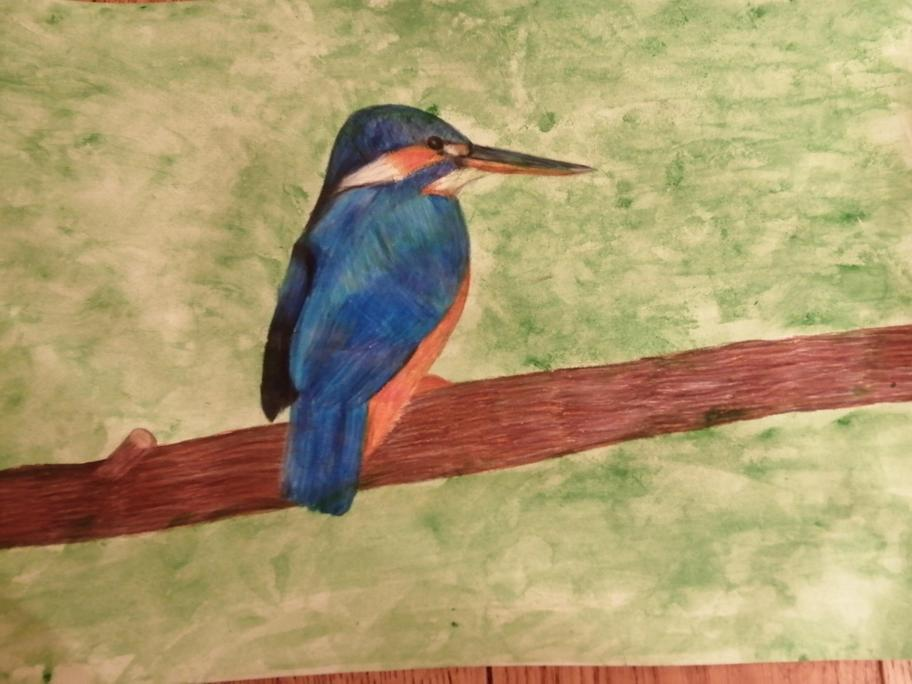 Charlotte Painted this King-Fisher