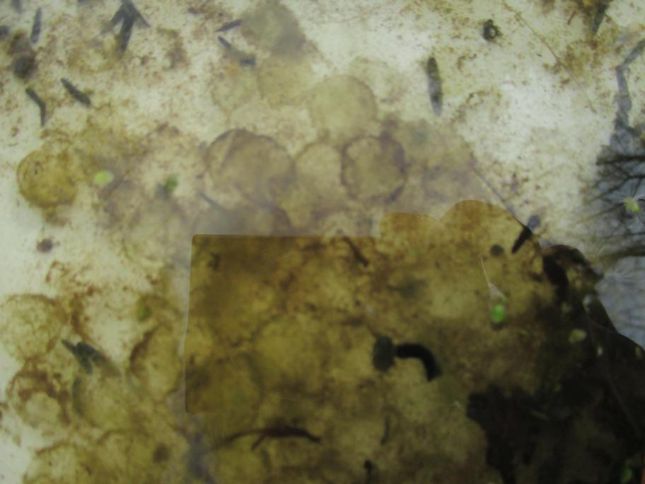 empty frogspawn