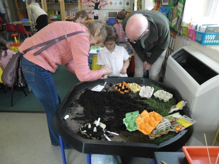 Planting wild flower seeds