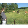 Alice and the cows and calves