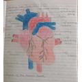 Alices heart