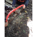 Y5 Working together to use a bow saw to make tree cookies