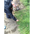 5P pond dipping