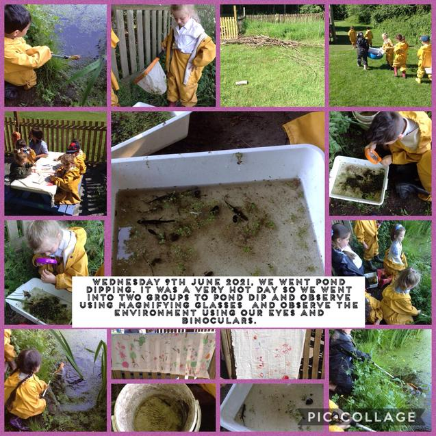 1W pond dipping