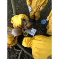 Year 1 using looking closely at the world around them