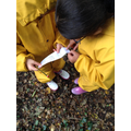 Year 2 using forest school to find the times table clues.