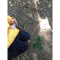 Exploring the woodland to create a book cover