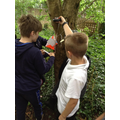 Year 5 Investigating the age of the trees.