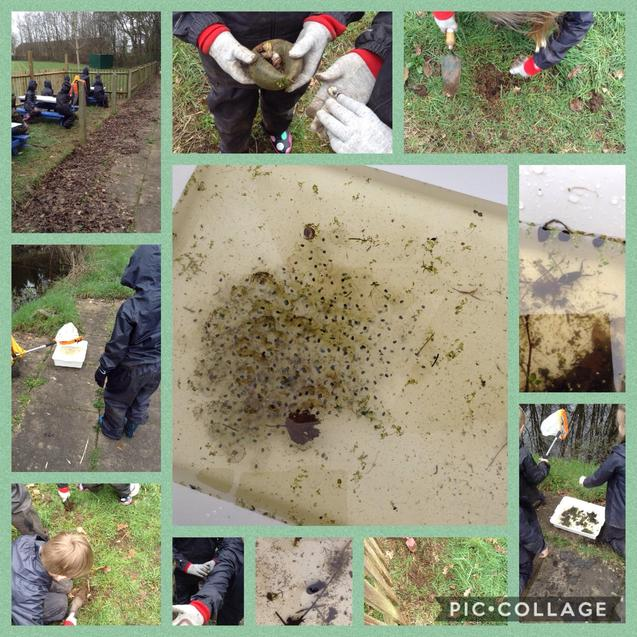 Pond dipping and bulb planting