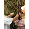 Year 5 Tree measuring