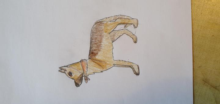 Megan's life like picture of a dog