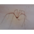 We looked closely at a spider...