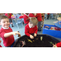 we had a dinosaur dig,