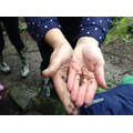 Mrs Kelly was happy that she found a newt.