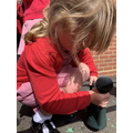 Planting a sunflower seed June 2019