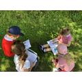 Wild Plant Hunt June 2019