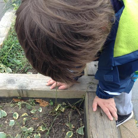 We have been searching for mini beasts in the garden