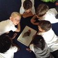 Each class are learning about our pet snails.JPG