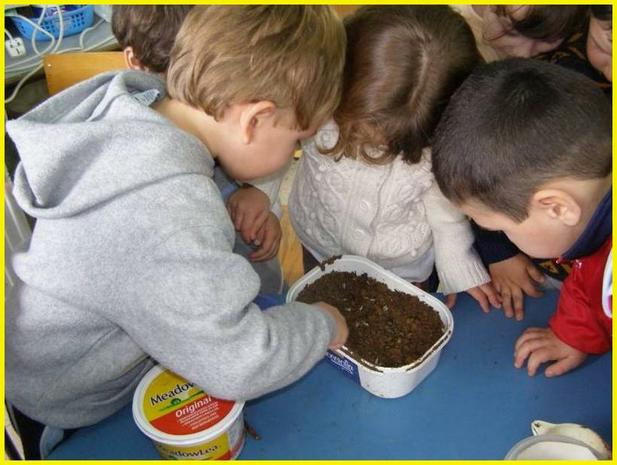 Plant your seed in a pot with soil.