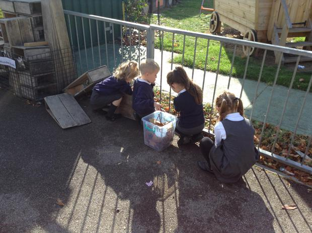 We are collecting natural objects to create nests for our owl babies