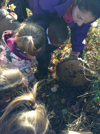 The children went to outside to explore habitats and we found lots of snails under a rock.JPG