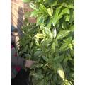 Sience Plants garden observation