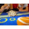 Harrison's tortoise