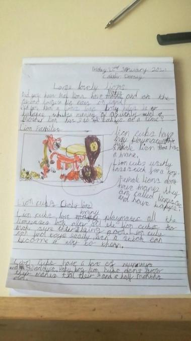 In year one and two we have written a non chronological report about a lion.