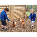 Halfway pupils help our hens settle in