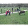 We saw pigs, goats, donkeys, highland cattle