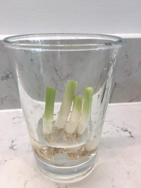 She put them in a glass