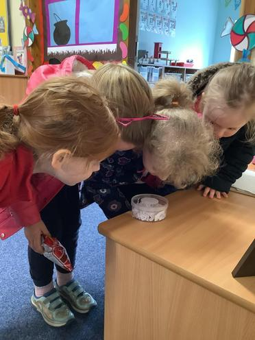 As part of our science topic on lifecycles, the children enjoyed observing ladybird larvae