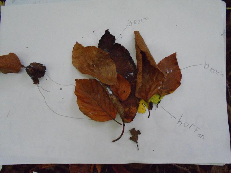 Identifying the leaves we use