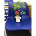 Y6 Tomato Plant (T Rex)