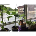 We can grow plants anywhere!