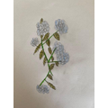 Reenie's plant drawing