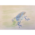 Harrison's frog picture