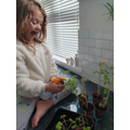 Elsie growing food for her home learning project.