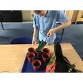 Pupil planting seeds